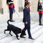Perro de Emmanuel Macron se orinó durante sesión de ministros en Francia