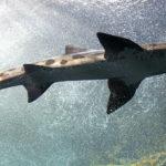 Una mujer es atacada por un tiburón cuando quería jugar con el.