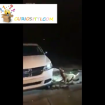Espectacular Vídeo: Pitbull ataca coche