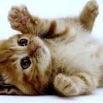 TIERNO VÍDEO: Intenta quitarle la comida a estos gatitos.