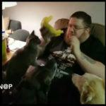 Vídeo Sorprendente: Si te descuidas se come la hamburguesa el gato.