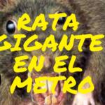 Rata gigante ataca empleado en Metro de Nueva York .