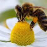 Las abejas son capaces de entender las matemáticas.