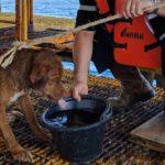 Encuentro a un perro nadando a 200 kilómetros de la costa
