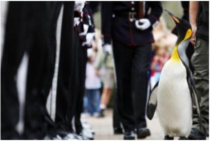 La vez que un pingüino fue nombrado caballero