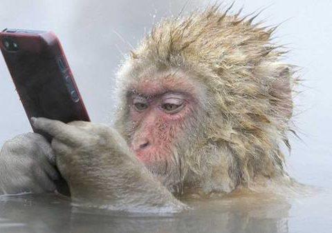 El primer híbrido humano-mono fue creado en China