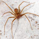 De vegana a carnívora por la picadura de una araña