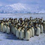 La población de pingüinos disminuye drásticamente